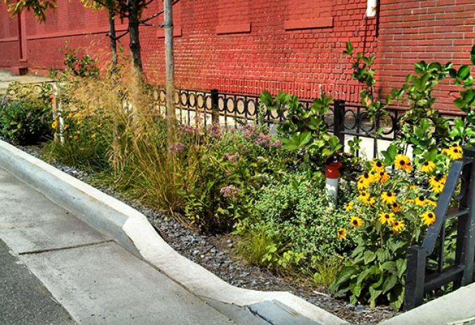 New York Plants Curbside Gardens to Soak Up Storm-Water Runoff